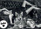 """Wow! Piękna Lara w brytyjskim """"Vogue"""" pozuje z wilkami! Stone do sesji wystylizowała inna słynna modelka. Zgadniecie która? [ZDJĘCIA]"""