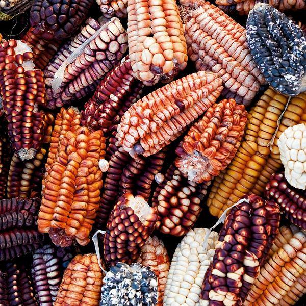 Peru, Lima, różnobarwna kukurydza