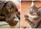 Wolisz psy czy koty? Psycholodzy sprawdzili, co to m�wi o twojej osobowo�ci