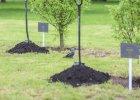 Na obchodach �wi�ta Lasu posadz� 17 tys. nowych drzew i krzew�w