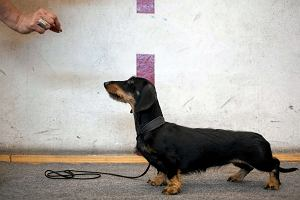 Chcesz przygarn�� psa? Zr�b to dobrze! Poradnik udanej adopcji [Cz�� 1.]