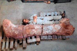 Argentyna: odkryto ko�ci najwi�kszego znanego do tej pory dinozaura