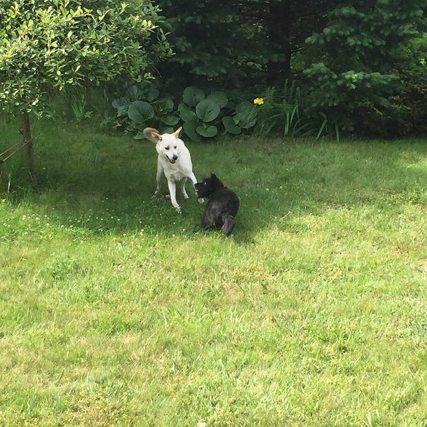 W ogrodzie z koleżanką, Jodą