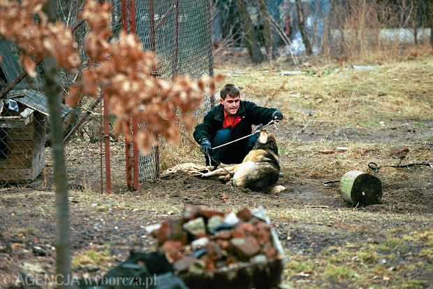Akcja uwalniania psa z �a�cucha, Warszawa