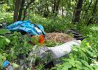 Nielegalne wysypiska w lasach maj� si� dobrze. Zarabiaj� na nich firmy wywo��ce odpady