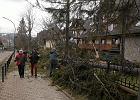 Tegoroczny stycze� w Zakopanem jednym z cieplejszych w historii