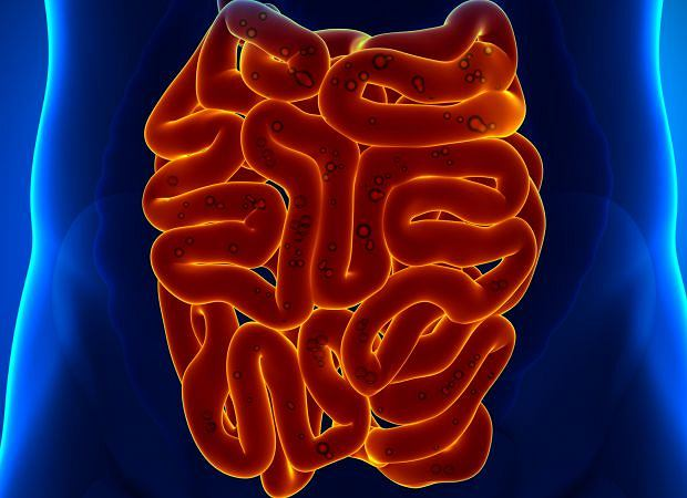 Anatomia człowieka: jelito cienkie
