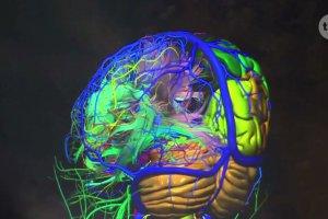 Czego może nauczyć się mózg? Po tych badaniach polskich naukowców trzeba będzie zmienić podręczniki do biologii