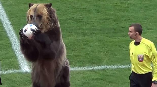 Niedźwiedź otworzy mundial w Rosji
