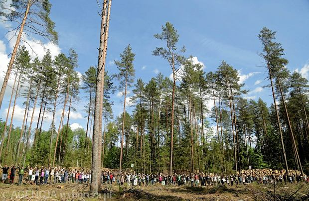 Bitwa o Puszczę Białowieską wygrana