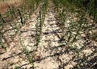 Rz�d przeznaczy 450 mln z� dla poszkodowanych rolnik�w