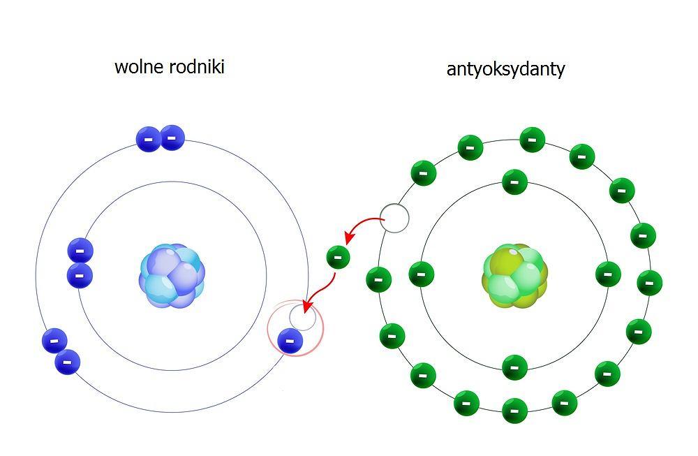 Wolne rodniki to określenie odnoszące się do atomów o niesparowanych elektronach lub cząstek powstałych w wyniku rozpadu wiązań chemicznych. Z reguły ich ilość w organizmie jest dosyć duża, ale u osób zdrowych przeciwwagą dla nich są tzw. antyoksydanty (inaczej przeciwutleniacze).