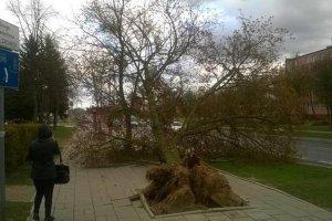 """Cyklon """"Stefan"""" nad Polsk�. Powalone drzewa i odwo�ane loty, silny wiatr do jutra"""