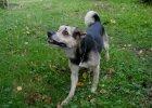 Po śmierci swojego pana bezimienny pies trafił na ulicę. Dzięki naszemu tekstowi znalazł dom