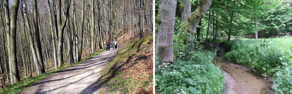 Trójmiejski Park Krajobrazowy (fot. po lewej: Szymon Nitka / Wikimedia Commons / CC BY-SA 2.0; po prawej: Joymaster /  Wikimedia Commons / public domain)
