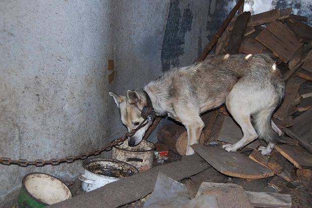 Właściciel zmarł, psy zostały w opuszczonym gospodarstwie. Potrzebują pomocy, zimy nie przetrwają
