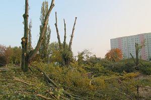 Kolejna wycinka drzew w Szczecinie. Bo koliduj� z inwestycj�