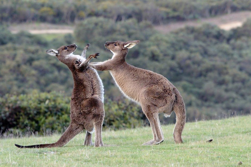 Fotografowie mieli szczęście. ''Śmiechu warte'' ze świata zwierząt [Comedy Wildlife Photography Awards]