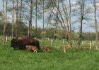 Malutkie bizony w Kurozw�kach. Zn�w urodzi�y si� bli�niaki! [ZDJ�CIA]