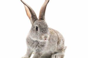 Zwierzęta w domu: królik, mięciutki i malutki