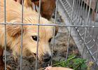 Prosimy o pomoc dla naszych psów