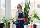 Teraz możesz kupić najmodniejsze rośliny ozdobne z całego świata... nie ruszając się z domu