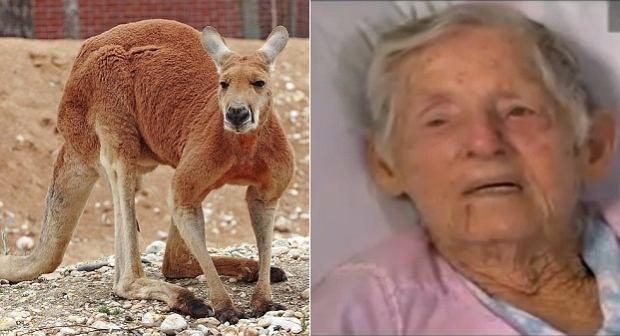 Kangur zaatakowa� 94-latk�. Nie pozosta�a d�u�na