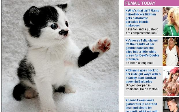 Ten Kot Wygląda Jak Hitler