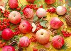 Dlaczego warto je�� jesienne owoce?