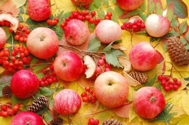 Jabłko: owocowy król jesieni