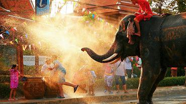 Tajlandia, Bangkok, słoń