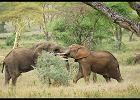 Afryka. Tanzania - moje wielkie afryka�skie marzenie, czyli wszystko, co trzeba wiedzie� o safari w Tanzanii
