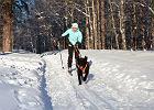 Skijoring w Polsce - z psem na narty