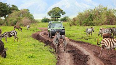 Safari w Kenii, Kenia, Afryka fot. Shutterstock