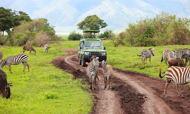 Safari w Kenii - wszystko, co trzeba o nim wiedzieć