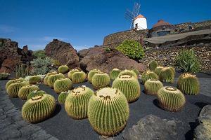 Tanie latanie: Wyspy Kanaryjskie, czyli wakacje na Lanzarote za mniej ni� 300 z�otych