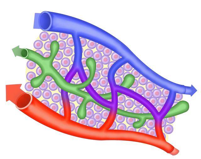 Angiolog zajmuje się naczyniami krwionośnymi, ale i limfatycznymi. Ponieważ te są istotnym elementem układu odporności, niejednokrotnie specjalista współpracuje z immunologami