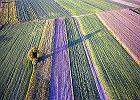 Mocny z�oty zjada rolnikom dop�aty