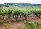 Tury�ci b�d� zwiedza� winnice i degustowa�