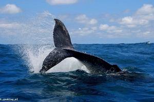 Wieloryby  na wyciągnięcie ręki