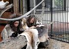 Wiadomo, dlaczego jaskiniowcy siedzieli w klatkach w zoo
