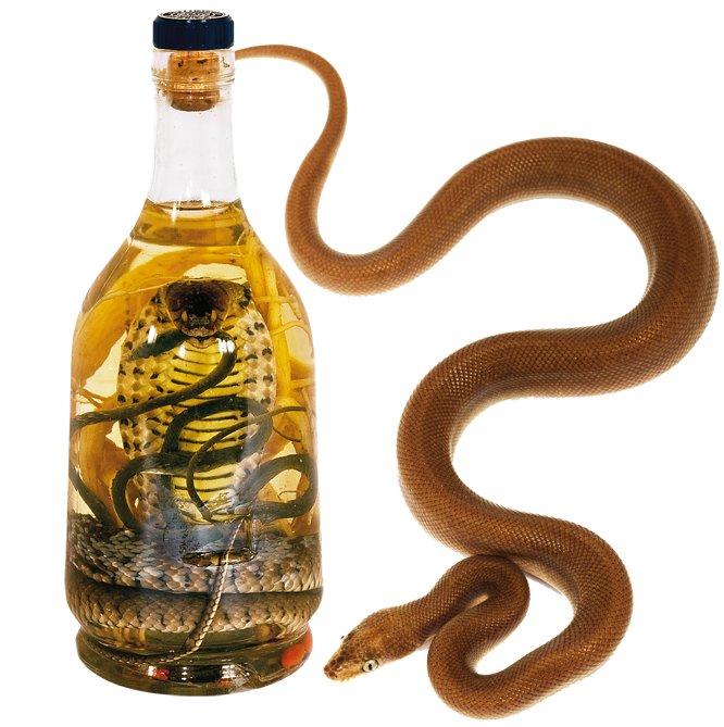 Ze śliny, węża i robaków: dziwne alkohole. Wężówka to zdradliwy napój dla miłośników mocnych wrażeń