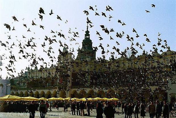 z7751111Q,Golebie-w-Krakowie.jpg