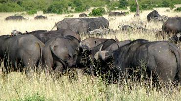 Na granicy Serengeti i Mary