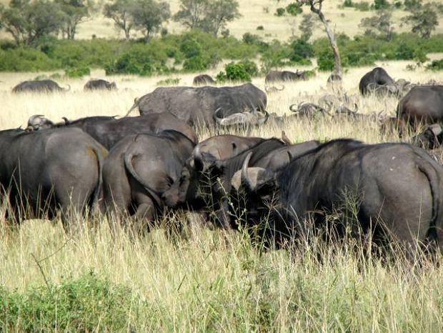Kenia. Zwierz�ta i ludzie