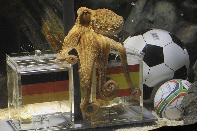 wynik meczu niemcy