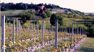 Winnica Pańska Góra