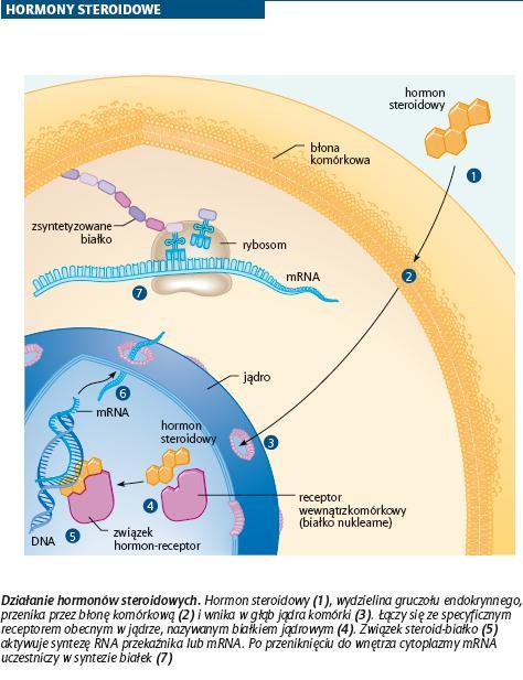 hormony steroidowe funkcje