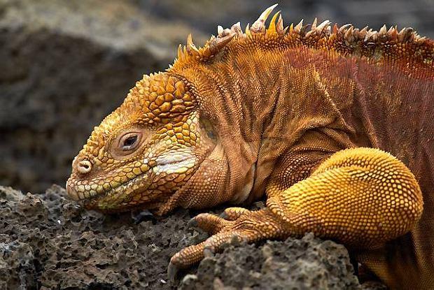 Serce zosta�o na Galápagos. Opowiada Sylwester Zacheja, in�ynier, fotograf