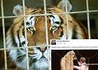 """UE chce zakazać występu dzikich zwierząt w cyrkach. Biedroń zachwycony: """"Dobre wieści z Europy"""""""